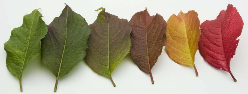 Leaves showing the beautiful colors of the seasons