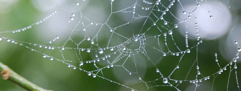Dewy drops on spider web